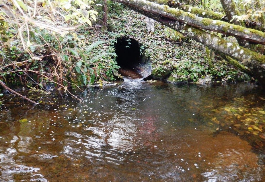 caption: A small, fish-killing culvert on Nordstrom Creek beneath state Route 112 on the Olympic Peninsula in 2016.