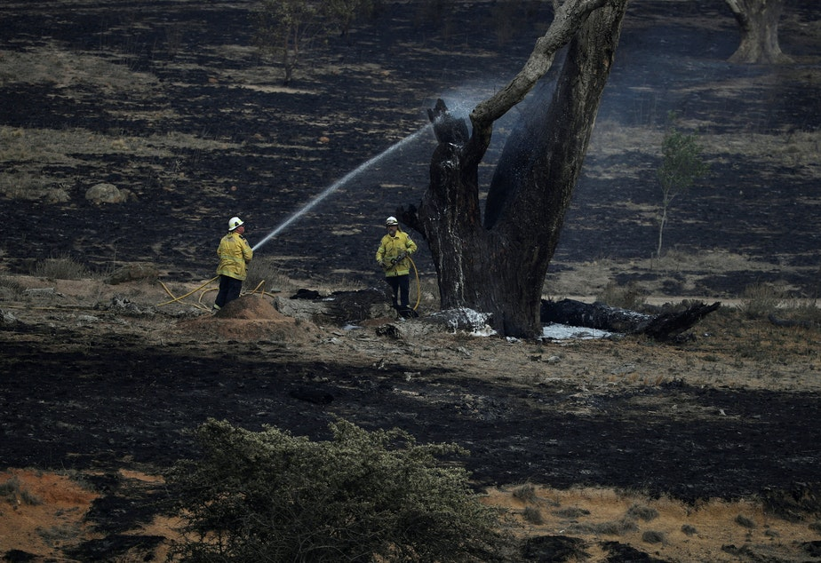 caption: Firefighters spray water on a smoldering tree in the wake of a bush fire near Bumbalong in New South Wales, Australia. February has brought much-needed rain to the state, where fires have burned about 13.3 million acres of land.