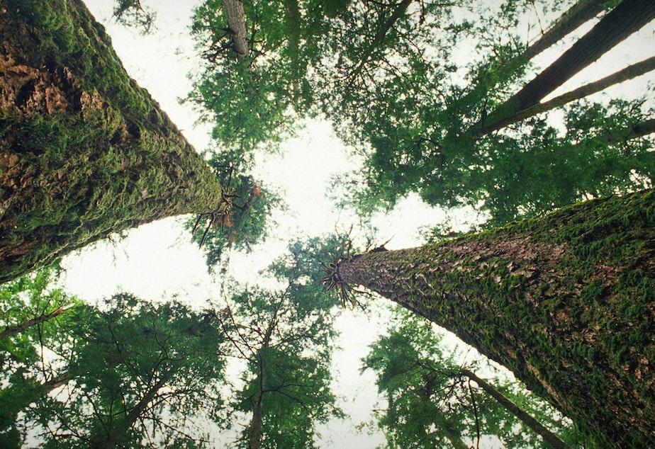 British Columbia Forest