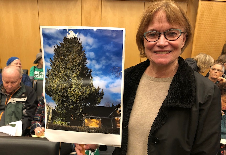 "caption: Elizabeth Darrow says ""the Greenwood Exceptional Cedar"" was saved after extensive neighborhood efforts, but the city code needs to protect big trees in general."