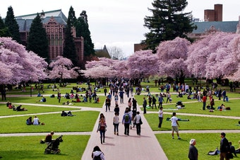 Students enjoy the annual display of cherry tree blossoms on UW's quad.