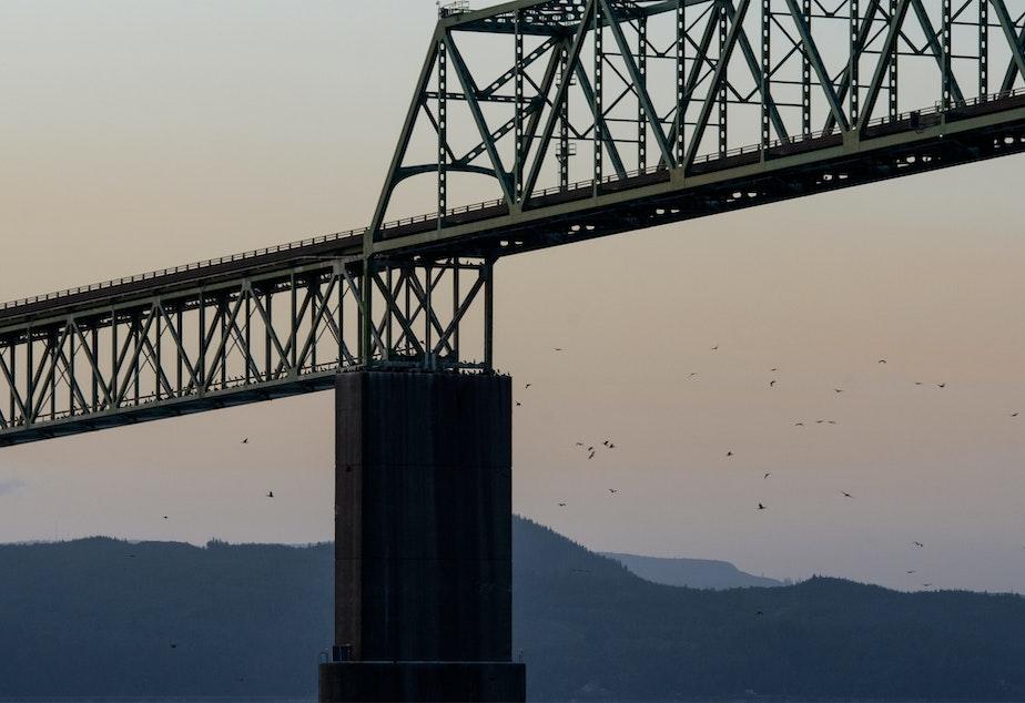 Cormorants returned to the Astoria Bridge to roost at nightfall on June 3, 2019.