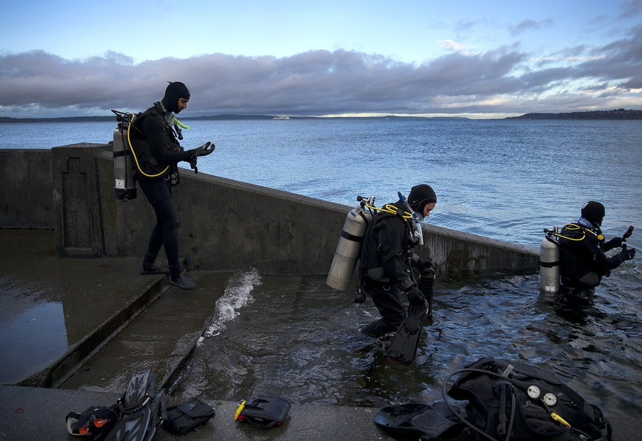 Divers with the Divers Institute of Technology working toward certification walk into the water for their first day of open water diving on Tuesday, November 27, 2018, during a King Tide at Alki Beach Park in Seattle.