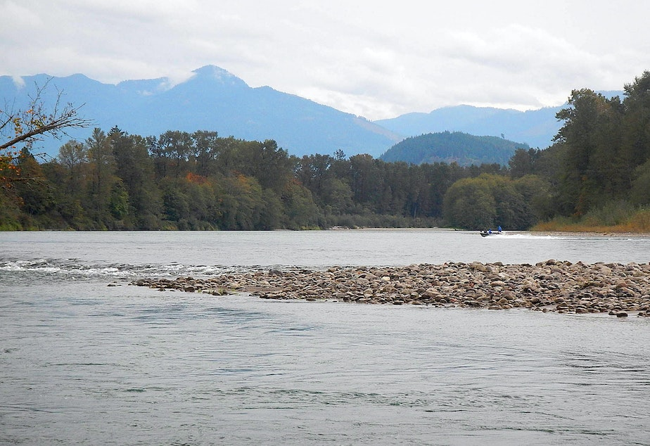 The confluence of Grandy Creek and the Skagit River, which produces most of the chinook salmon in Puget Sound.