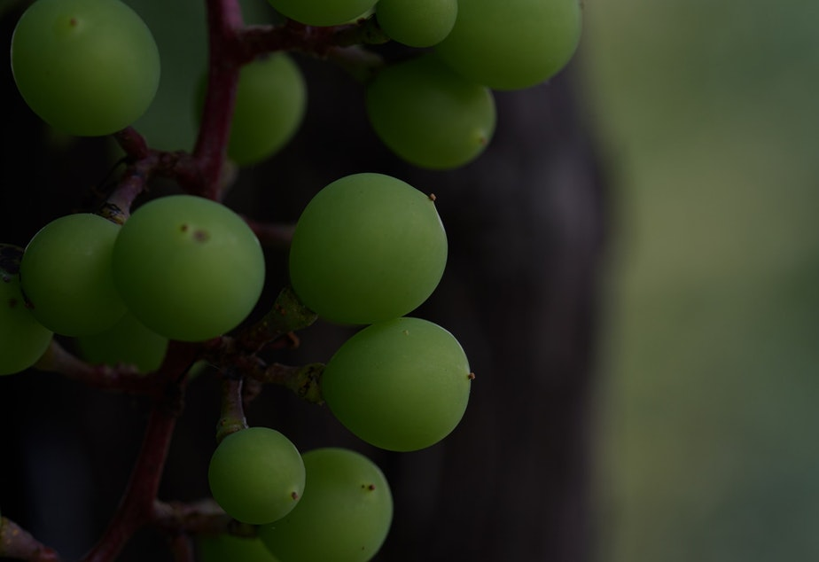 caption: This year's grapes could make next year's smokey varietals.