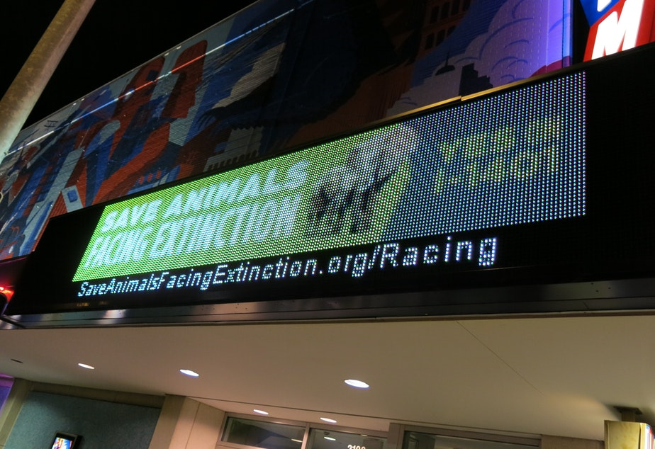 """caption: Cinerama preview of """"Racing Extinction"""" raised money for Initiative 1401."""
