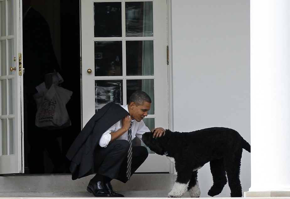 caption: Then-President Barack Obama pets the family dog Bo outside the Oval Office of the White House.