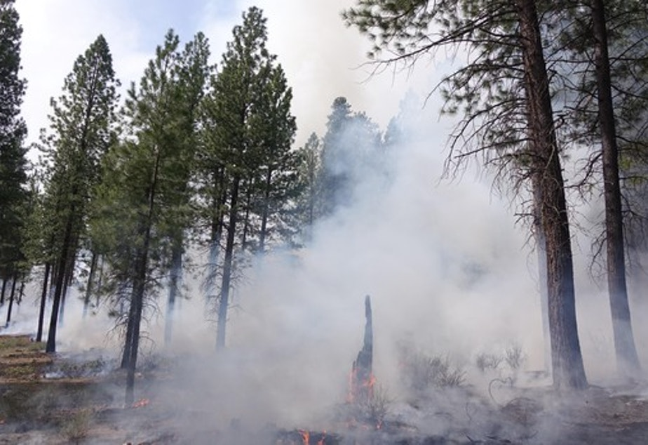 <p>The low-intensity prescribed fire is designed to burn grass, shrubs, stumps, accumulated pine needles and any other dead wood on the forest floor.</p>