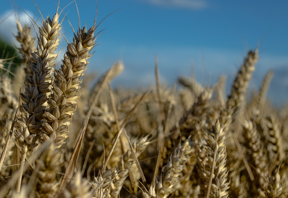 Do you worry about gluten? Genetically modified foods?