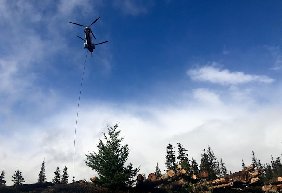 A helicopter is used to fly logs from a staging area to streams that need restoration but are no longer reached by roads. This is the largest stream restoration effort ever in the Northwest.CREDIT: COURTNEY FLATT